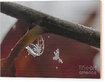 Snow Crystal In Water Drop Wood Print by Dan Friend