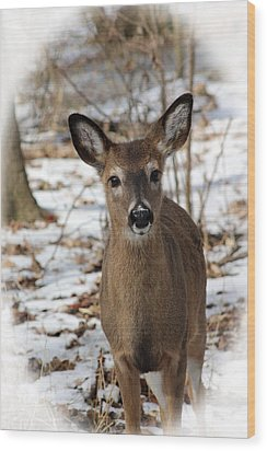 Wood Print featuring the photograph Snow Deer by Lorna Rogers Photography