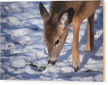 Snow Digging Wood Print by Karol Livote