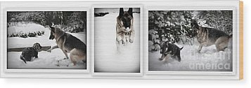 Wood Print featuring the photograph Snow Dogs. Triptich by Tanya  Searcy