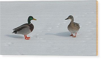 Wood Print featuring the photograph Snow Ducks by Mim White