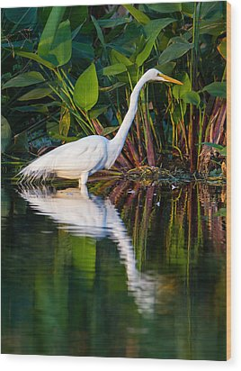 Snow Egret And Its Reflection Wood Print by Andres Leon