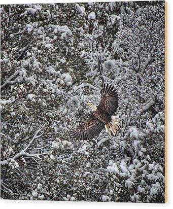 Wood Print featuring the photograph Snow Flight Bald by Britt Runyon