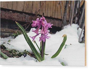 Snow Flower Wood Print by Fiona Kennard