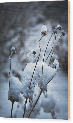 Snow Forms Wood Print by Belinda Greb