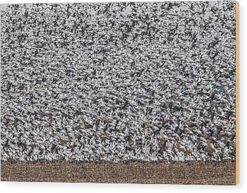 Snow Geese Wood Print by Brian Williamson