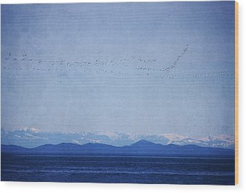 Wood Print featuring the photograph Snow Geese Over The Ocean by Peggy Collins