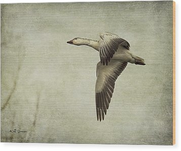 Snow Goose In Flight Wood Print