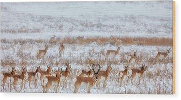 Snow Grazers Wood Print by Darren  White