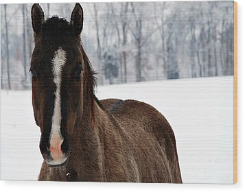 Wood Print featuring the digital art Snow Horse by Linda Segerson