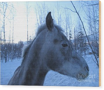 Snow Horse Whisperer  Wood Print by Elizabeth Stedman