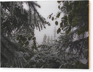 Wood Print featuring the photograph Snow In Trees At Narada Falls by Greg Reed