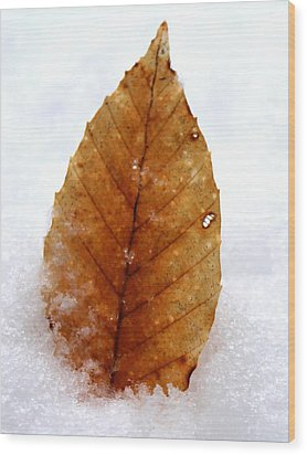 Wood Print featuring the photograph Snow Leaf by Candice Trimble