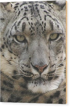Wood Print featuring the photograph Snow Leopard by Diane Alexander
