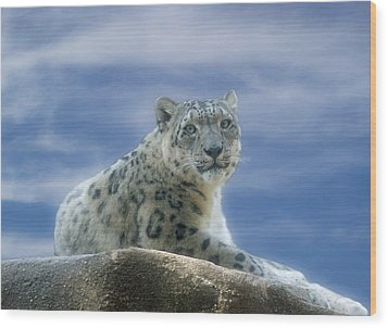 Snow Leopard Wood Print by Sandy Keeton