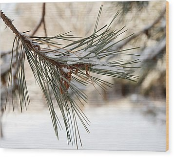 Wood Print featuring the photograph Snow Pine by Courtney Webster