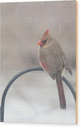 Snow Shower Wood Print by Kay Pickens