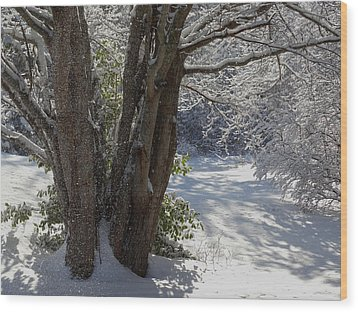 Snow Sparkles Wood Print by Dianne Cowen