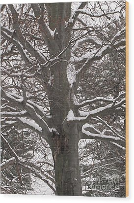 Snow Tree Wood Print by Melissa Stoudt