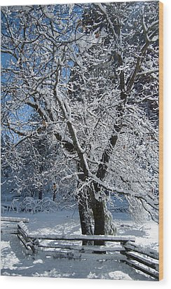 Snow Tree - Yosemite National Park Wood Print by Jim Pavelle