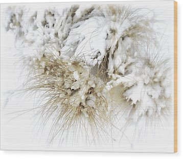 Snow Whiskers Wood Print by Julie Palencia