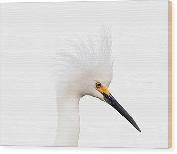 Wood Print featuring the photograph Snow White Egret by Phil Stone