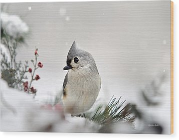 Snow White Tufted Titmouse Wood Print by Christina Rollo