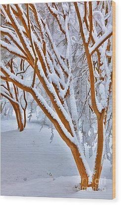 Snow Wonderful Snow - Greensboro North Carolina Wood Print by Dan Carmichael