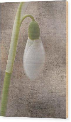 Snowdrop Bud Wood Print by Faith Simbeck