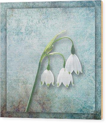 Snowdrop Wood Print by Lynn Bolt