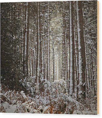 Wood Print featuring the photograph Snowed Forest by Antonio Jorge Nunes
