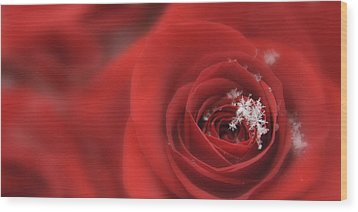Snowflakes On A Rose Wood Print by Lori Grimmett