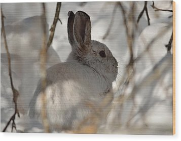 Snowshoe Hare Wood Print
