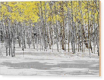 Snowy Aspen Landscape Wood Print by The Forests Edge Photography - Diane Sandoval