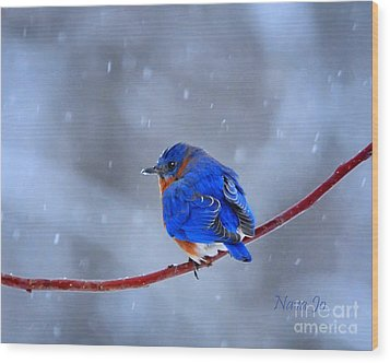 Snowy Bluebird Wood Print