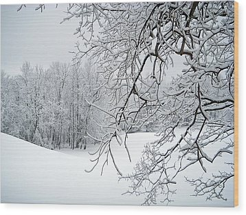Snowy Branches Wood Print by Aimee L Maher Photography and Art Visit ALMGallerydotcom