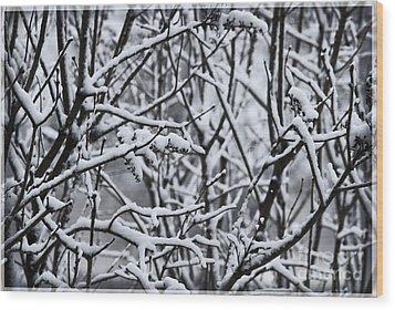 Snowy Branches Wood Print by Birgit Tyrrell
