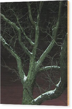 Snowy Branches Wood Print by Guy Ricketts