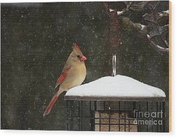 Snowy Cardinal Wood Print by Benanne Stiens