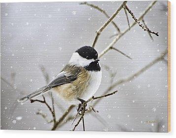 Snowy Chickadee Bird Wood Print by Christina Rollo