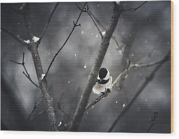 Snowy Chickadee Wood Print