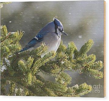 Snowy Day Blue Jay Wood Print