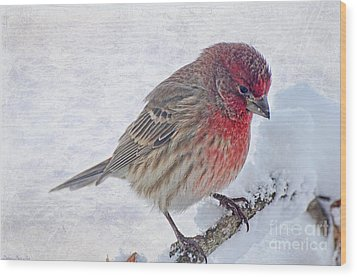 Snowy Day Housefinch Wood Print by Debbie Portwood