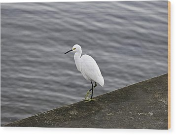 Wood Print featuring the photograph Snowy Egret by Anthony Baatz