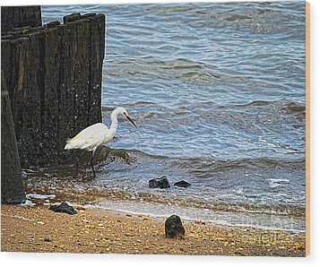Snowy Egret At The Shore Wood Print