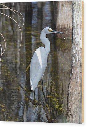 Snowy Egret Big Cypress Swamp Wood Print