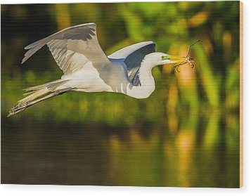 Snowy Egret Flying With A Branch Wood Print