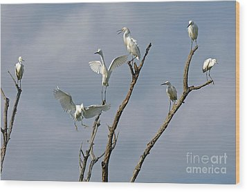 Wood Print featuring the photograph Snowy Egret Inn by Olivia Hardwicke