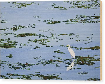 Snowy Egret Wood Print by Mike Robles