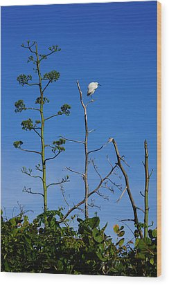 Snowy Egret On Yucca Perch Wood Print by John Myers